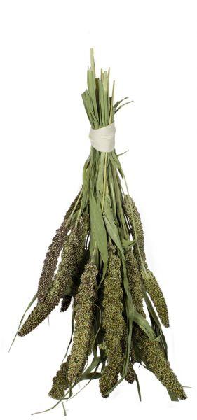 Grüne Senegalhirse