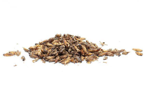 Heimchen Insekten für Geflügel Wachtel